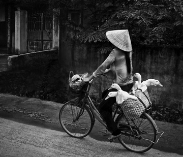 Photograph of Chinese woman riding bicycle with ducks in baskets attached to bike